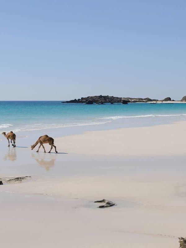 Ultimate Oman Experience – Arabian Adventure