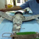 Experience Abu Dhabi Falcon Hospital Tour